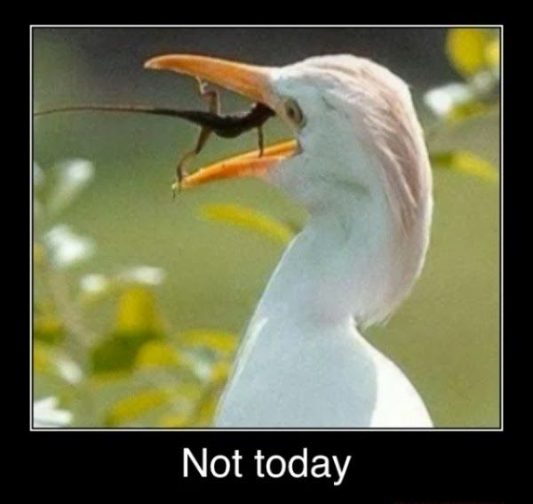 Funny Egret Lizard Not Today Meme Joke PictureFunny Lizard Jokes