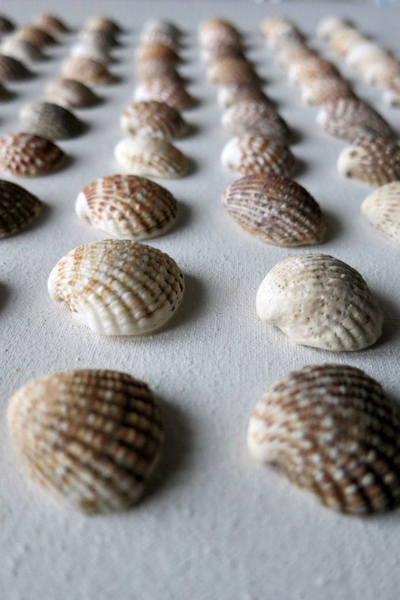 90pcs Small Brown Ark Clam Seashells  Jewelry by MrsBeachComber