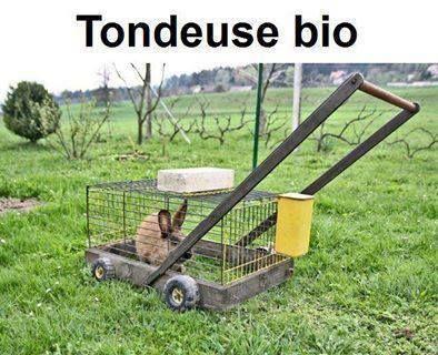 Une alternative au tracteur à poules ;-)