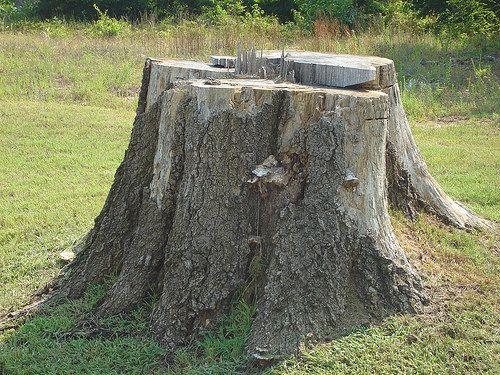 Good How to Kill Tree Stumps Naturally