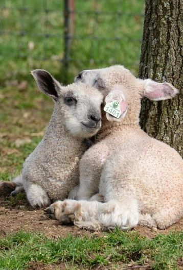 A moment of peace in a hostile world. Whose plate did they end up on? Their lives mattered to me. They were nothing but property. Barcodes. Profit. This is why I am vegan.