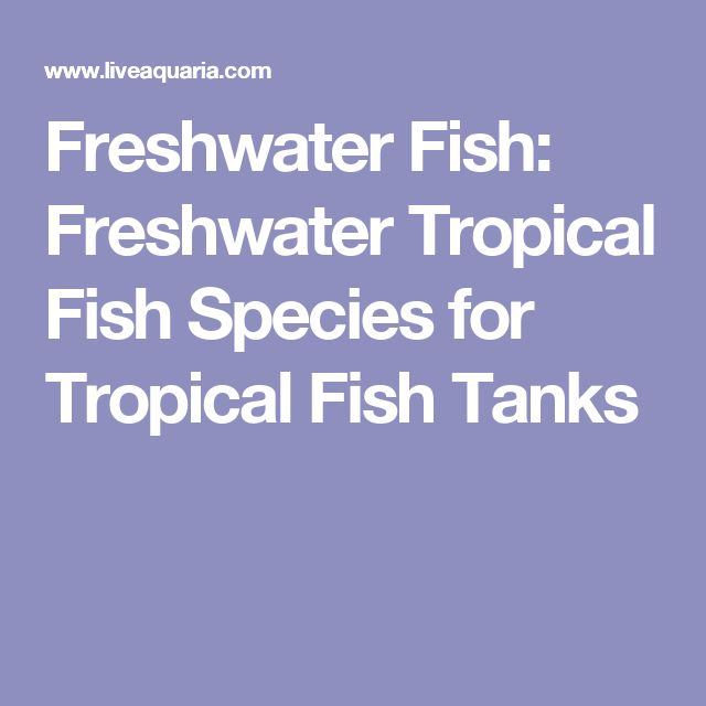 Freshwater Fish: Freshwater Tropical Fish Species for Tropical Fish Tanks