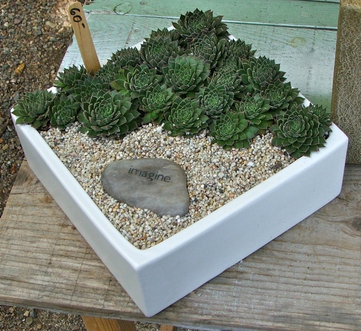 Diagonal succulent box.