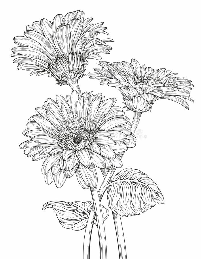Gerbera Flowers Stock Illustration In 2020 Flower Line Drawings Flower Sketches Daisy Drawing