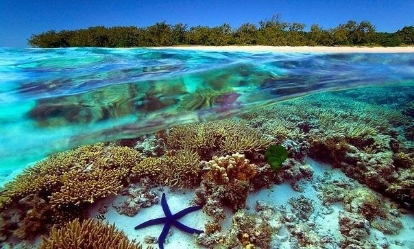 the magnificent great barrier reef of australia