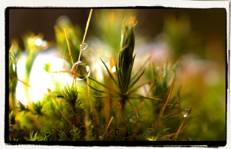 Moss with melting snow, Finland 18th February 2017. Macro 40mm.
