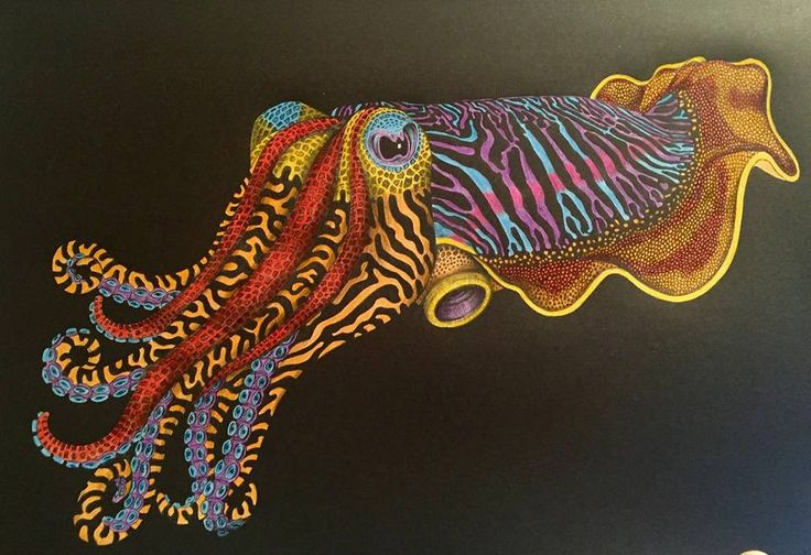 Cuttlefish By Julie T Coloring BooksAdult