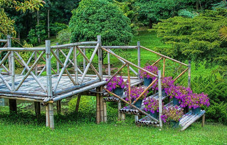 Überstanden Sie Bambus, die Schritte von einfachen Kunststoff-Töpfe mit Akzent sind. Alle Pflanzen stehen unter die violetten Blüten unter den reicher, grüne Landschaft.