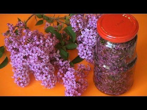 Лечим суставы цветами сирени - YouTube