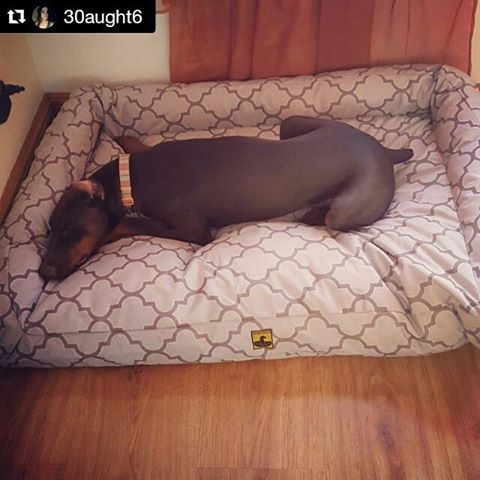 "Nitro's ""indestructible"" dog bed is here. It's a beautiful X-Large Lattice Color Bolstered Bed.‬ Covered by our 90 Day Chew Proof Guarantee. Check out more dog beds at: http://k9ballistics.com"