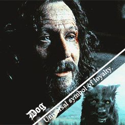 Sirius Black-Padfoot (I kinda thought they could have done better with Sirius' dog form in the movies....)