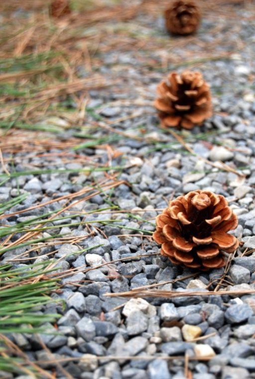 Pine cone path