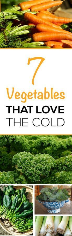 Plant a second crop now!  Learn the 7 vegetable plants that love the cold and will bring you a great late fall harvest.