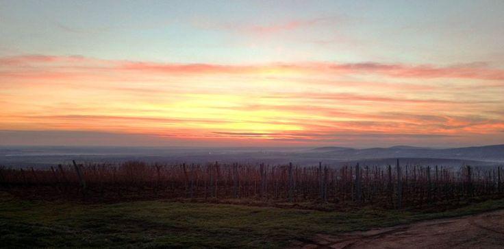 Top #wine pic >>> @VineyardKapolna >>> Beautiful sunset on the top of #SzentTamas vineyard in #Mad, #Tokaj region... Follow us on Twitter @TopWinePics