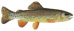 Arizona's Trout Challenge - Apache Trout. *Program was developed to encourage anglers to learn more about fishing opportunities in the state. Arizona Game and Fish Department manages many waters statewide to provide anglers the opportunity to catch several different species of trout, including two found only in the Southwest, Gila Trout and Apache Trout.