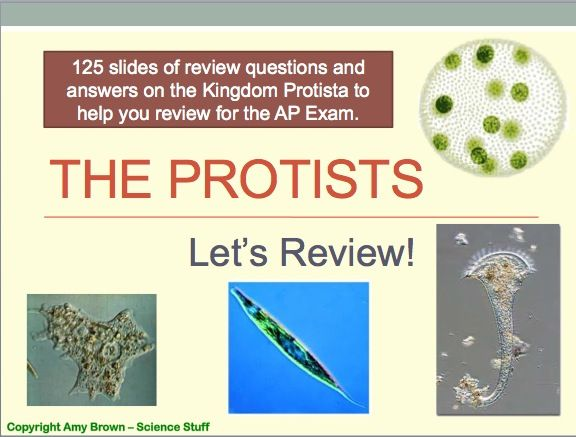 ap biology essay protists Protists review with intelligent questions and answers written by biology teachers  study protozoans and algae and deepen your knowledge of microbiology.