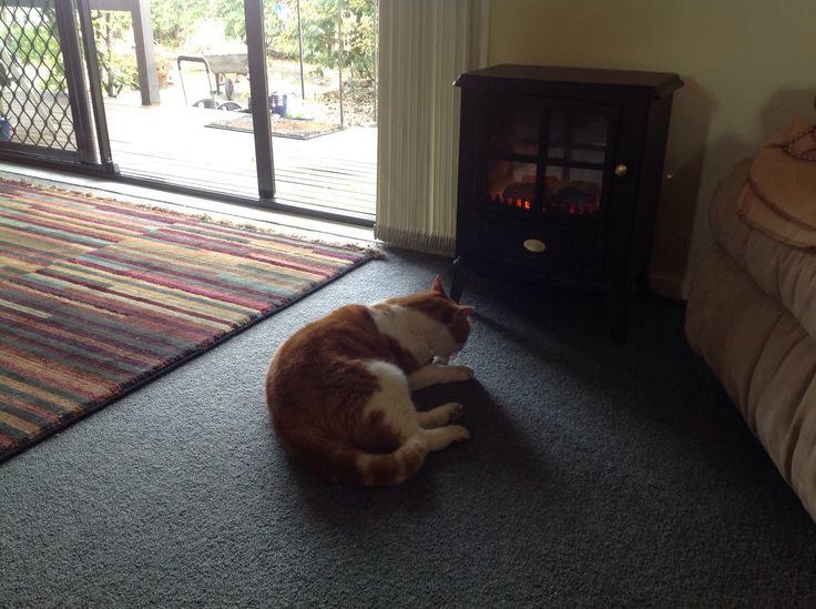 Loves the heater and will head for it even if the flame isn't on