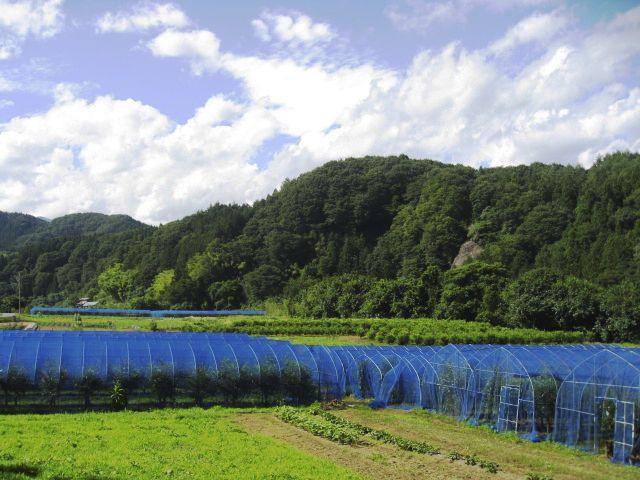 TENSAN:Japanese oak silk farm - 天蚕ファーム