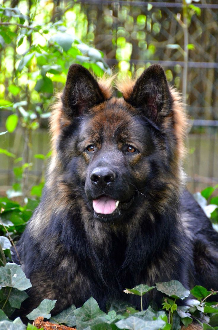 Understanding Canine Social Structure - PetPlace