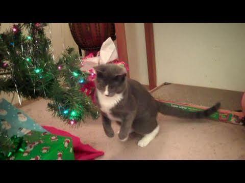 Funny Kitten Hops Like a Bunny - http://www.gigglefinger.com/funny-kitten-hops-like-a-bunny/