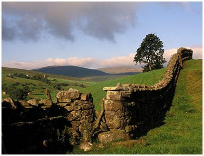 Stone walls winding through the hills of Yorkshire Dales, England