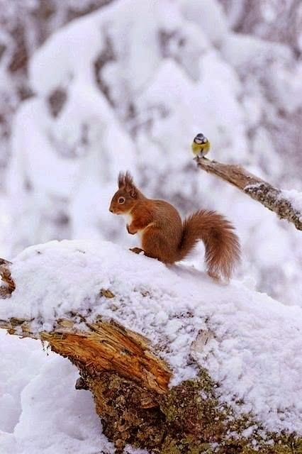 Oh a Squirrel!!! Let's give him some food ...k