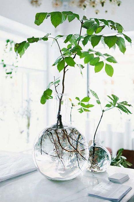 Такая красота будет радовать глаз и разнообразит декор квартиры или дома.