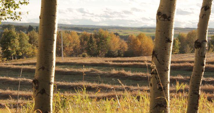 Autumn in Alberta
