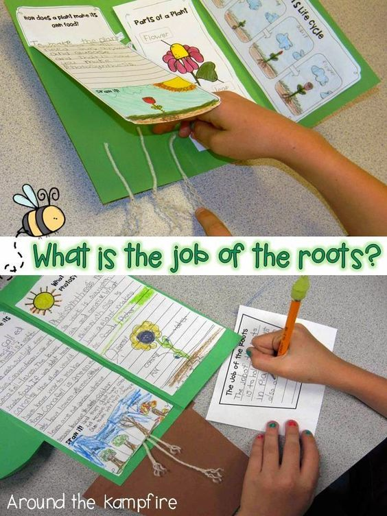 What is the job of the roots? Post includes FREE printable anchor charts for photosynthesis and parts of a plant.