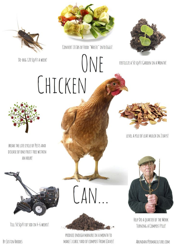 Personal: I LOVE eating chicken, but it really never crossed my mind just how far one chicken can go. Although I can't necessarily control what happens to all the parts of the chicken I consume, I think it is important to understand the abilities of sustainability. You can truly get the most out of just one thing.