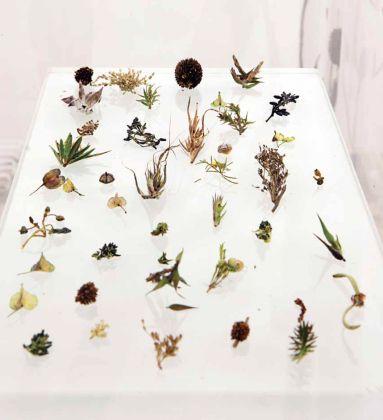 Janet Laurence | The Alchemical Garden of Desire, native Australian plants