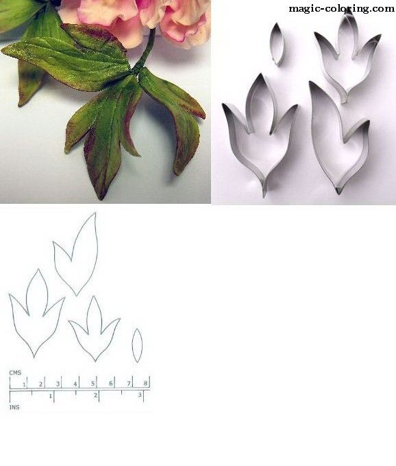 MAGIC-COLORING | Peony flower template