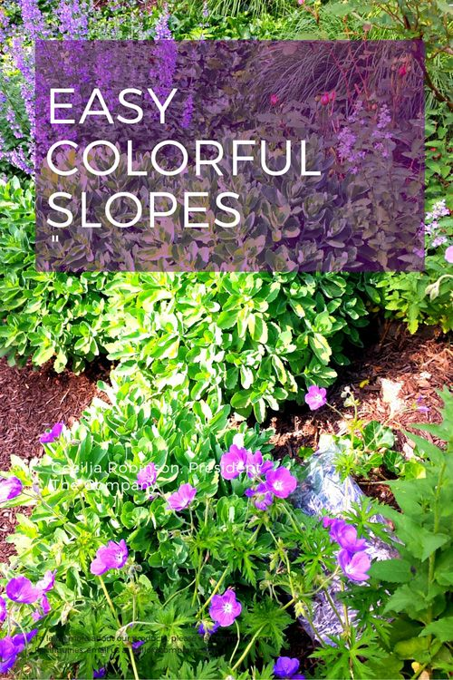 17 best images about plants for banks hillsides and for Hillside landscaping plants