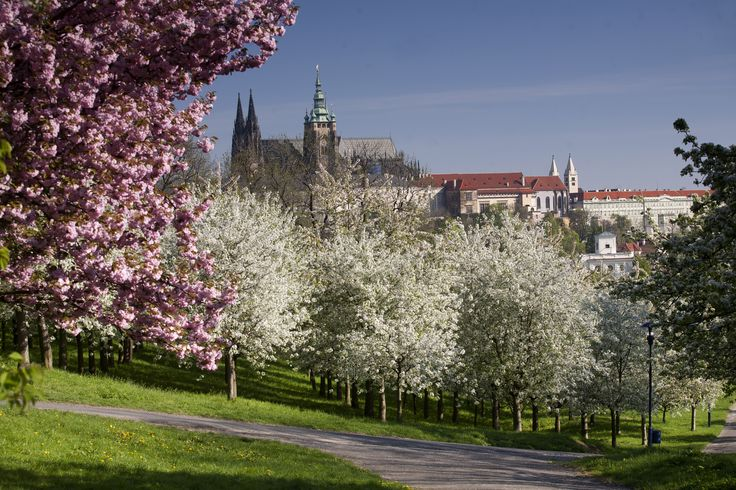 Spring in Prague, Petřín hill