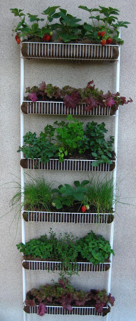 17 Best Ideas About Patio Herb Gardens On Pinterest