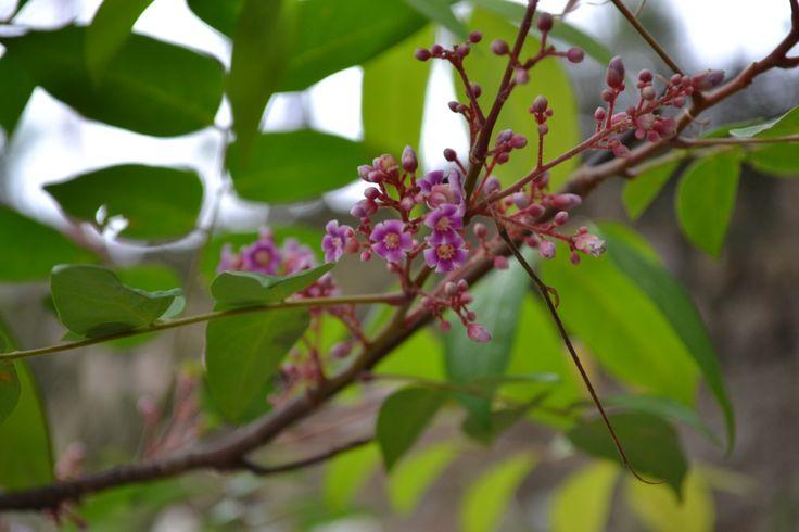 small beautiful flower