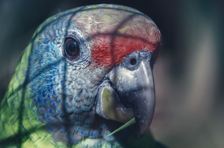Parrot by TasosKDs on 500px