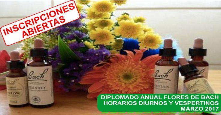Diplomado Flores de Bach. #CentroRenaSer