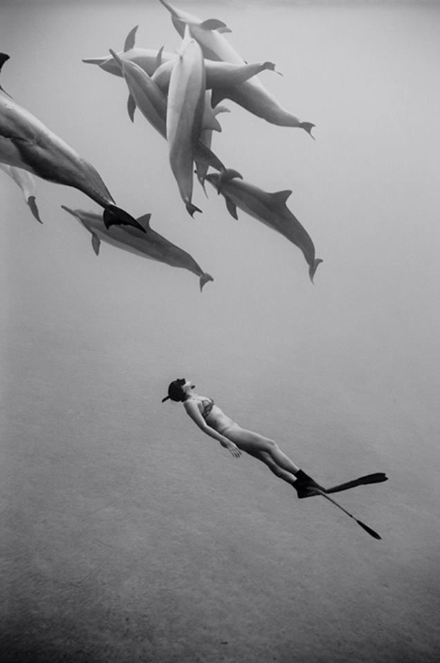 Swimming with the dolphins :)