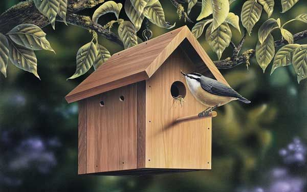42 best household tips images on pinterest house plans for Different types of birdhouses