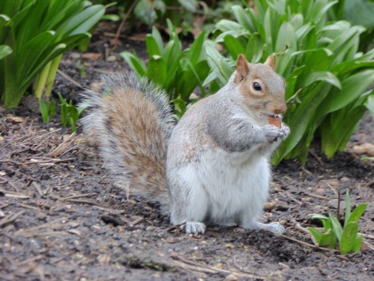 While we were walking along the St. James's Park we met these cute squirrels which run freely all over the park. So funny!
