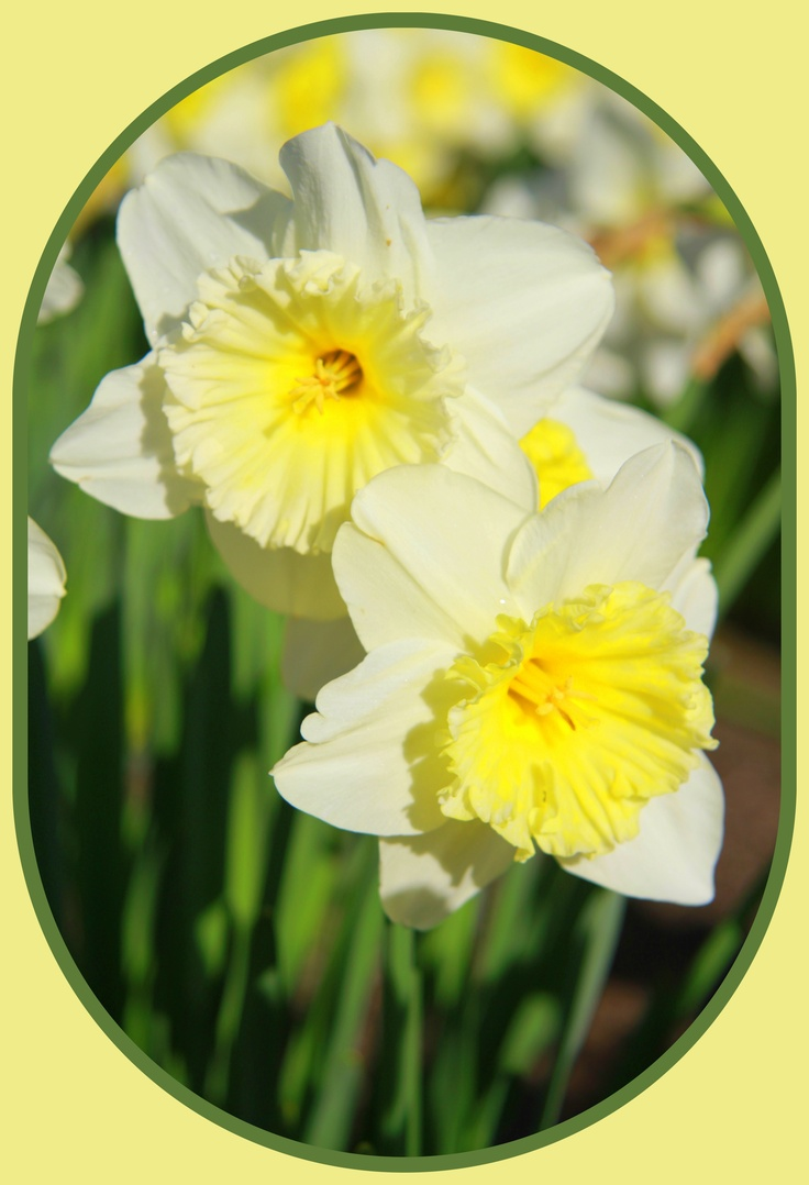 compare xontrast daffodils and stopping by the woods Robert frost compare and contrast stopping by the woods on a snowy evening and after apple picking keyword essays and term papers available at echeatcom, the largest free essay community.