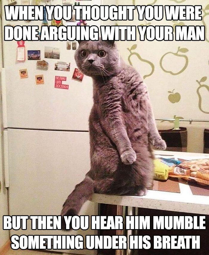 Funny Marriage Memes Cat Quotes Funny Funny Cat Jokes Funny Animal Quotes