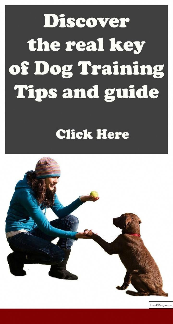 Please Click Here To Get More Information On How To Train Dog