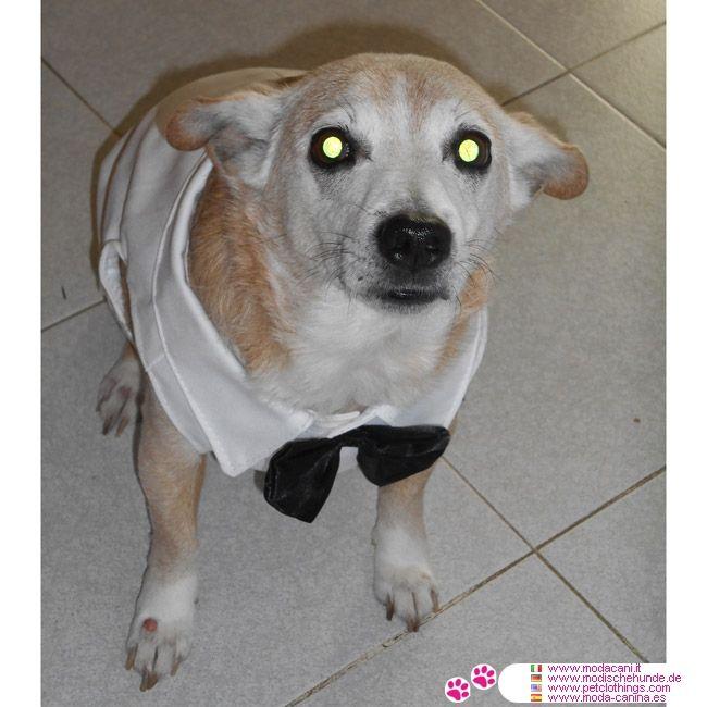 Weiss Smoking für Große Hunde #Hunde - Wenn Sie ein Brautkleid oder Smoking für Ihren Hund suchen, hier ist das Kleid Sie gesucht haben: in Baumwolle mit weiße Kragen und schwarz Querbinder