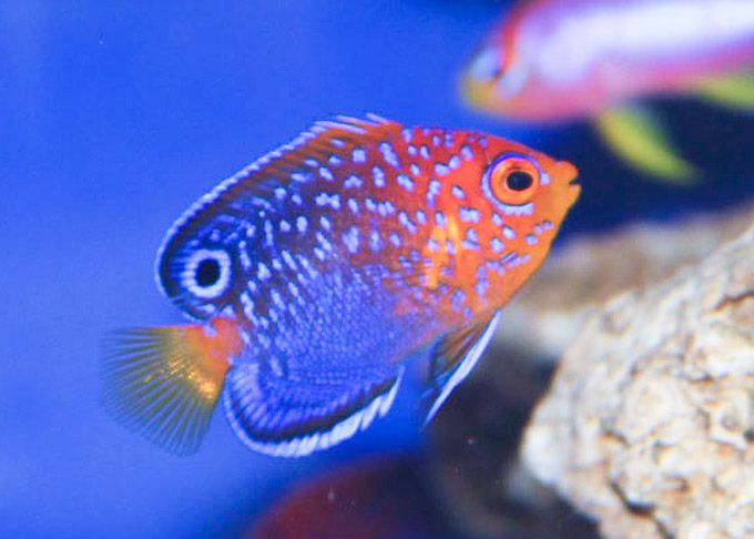 62 best Saltwater Fish images on Pinterest | Fish ...