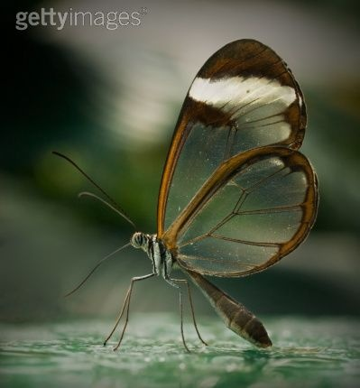 Crystal Butterfly