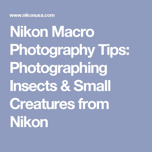 Nikon Macro Photography Tips: Photographing Insects & Small Creatures from Nikon