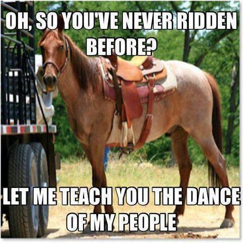 Horse jokes - photo#41