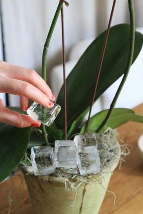 Een handig trucje om je kamerplanten te redden - Gazet van Antwerpen: http://www.gva.be/cnt/dmf20160615_02340236/met-dit-trucje-is-de-redding-van-je-kamerplanten-nabij